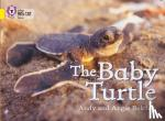 Belcher, Andy - Baby Turtle